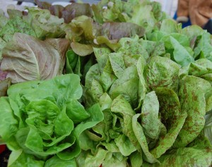 Glorious Lettuce from Lily Pad Farms