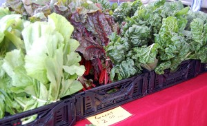 Greens from Hillside Farms (Barton Creek Market)