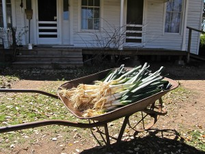 Leeks from Boggy Creek Farm